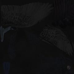 crowDiffuse